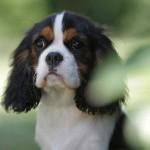 La leadership con il cane