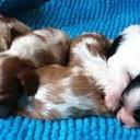 Sono nati i cuccioli!!!