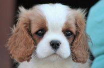 Nuovi Cuccioli disponibili ORA!